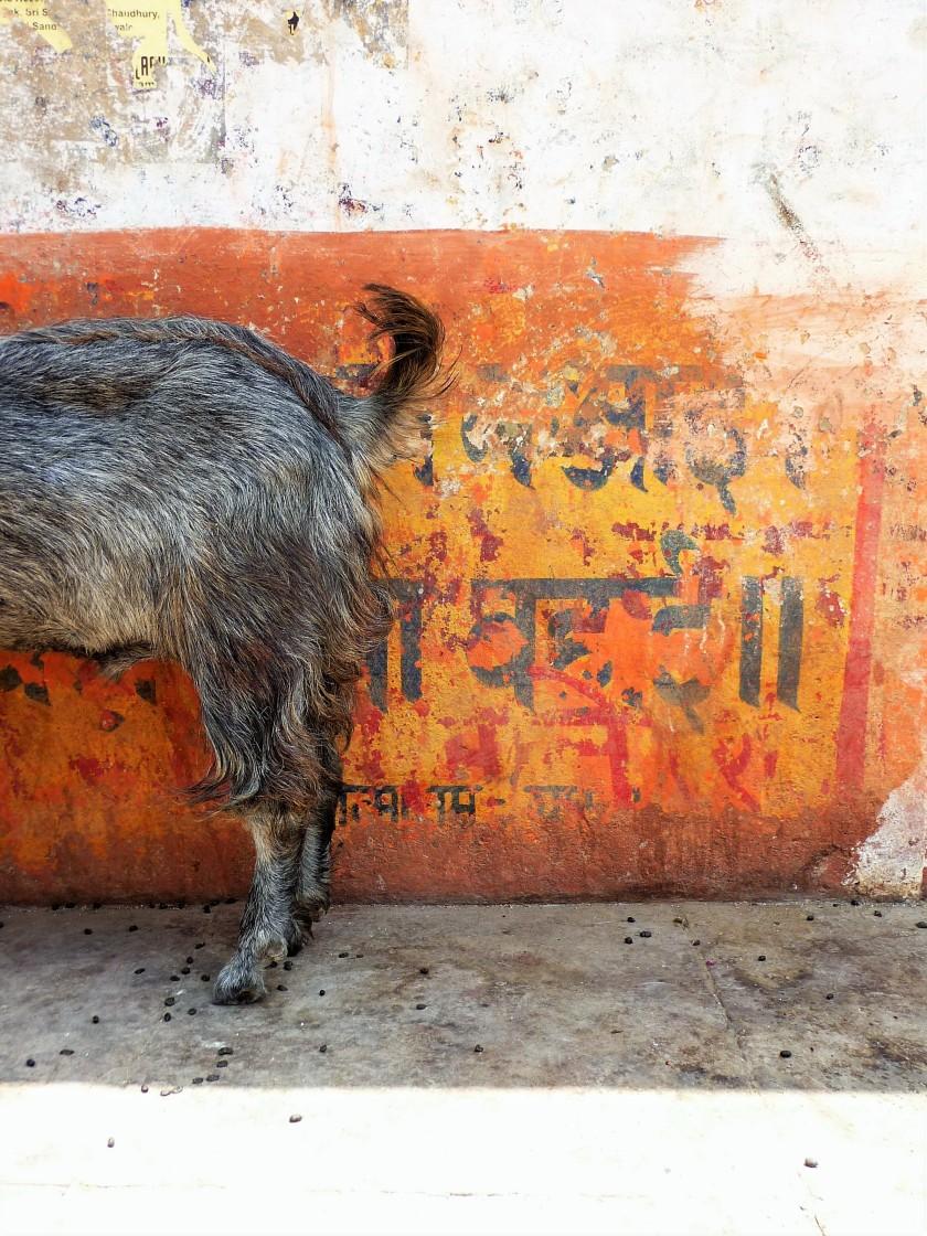 india-2014-722